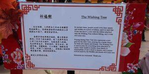 wishing tree 3
